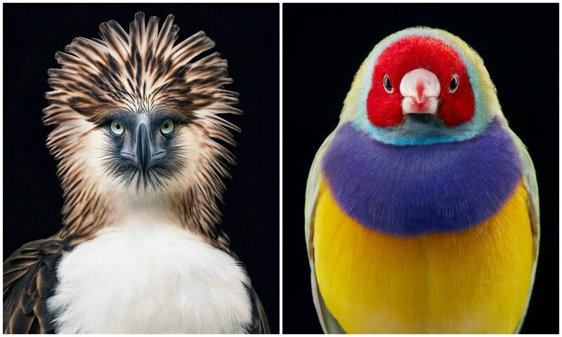 25 невероятных портретов красавиц-птиц (26фото)