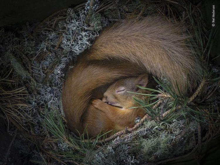 Завораживающие фотографии дикой природы, показывающих её в прекрасном и странном виде (16фото)