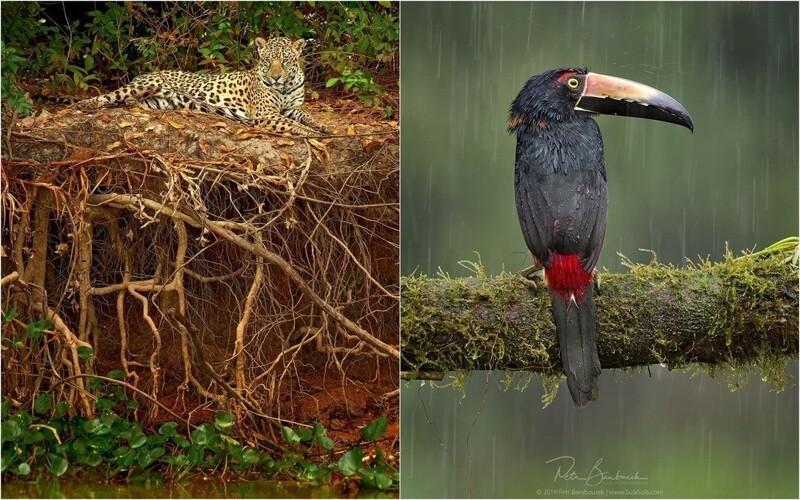 Животные и птицы на фотографиях Петра Бамбусека (26фото)