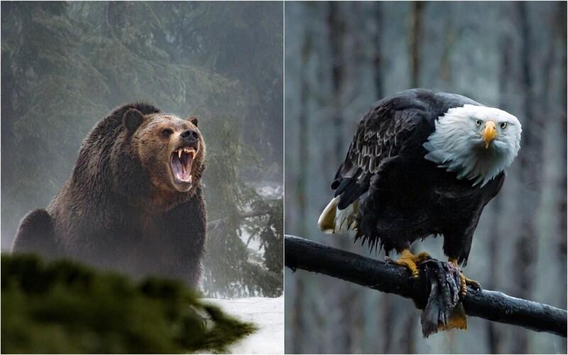 Дикие животные и птицы на фотографиях Максима Исраэля Кольера (25фото)
