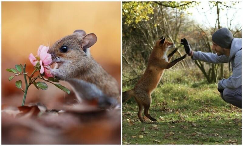 Чудо природы: удивительные снимки диких животных в лесах Австрии (31фото)