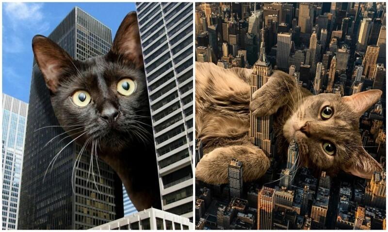 Мастер фотошопа показал, каким станет мир, если его захватят коты (31фото)