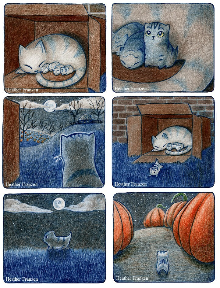Приключения котёнка (8фото)