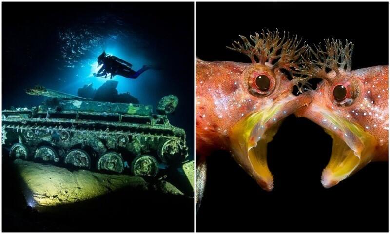 Под водой: крутейшие фото с конкурса Underwater Photographer of the Year 2021 (18фото)
