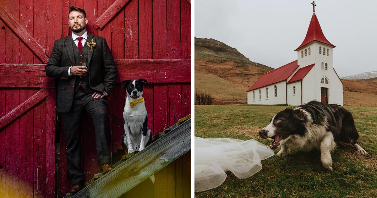 19 собачьих финалистов конкурса на лучшее свадебное фото (20фото)