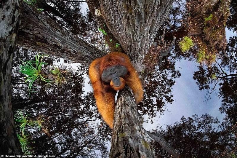 Победители фотоконкурса World Nature Photography Awards (26фото)