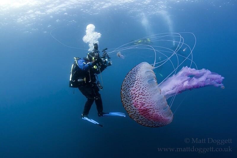 Подводный фотограф Matt Doggett (10фото)