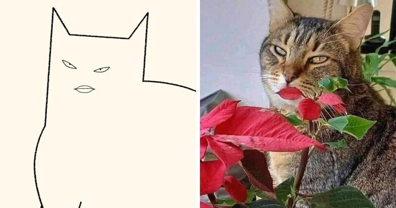 Художник рисует минималистичные рисунки мемных котов (15фото)