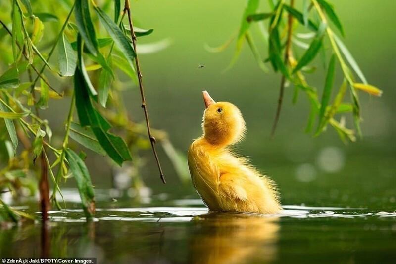 Bird Photographer of the Year 2021: Победители (8фото)
