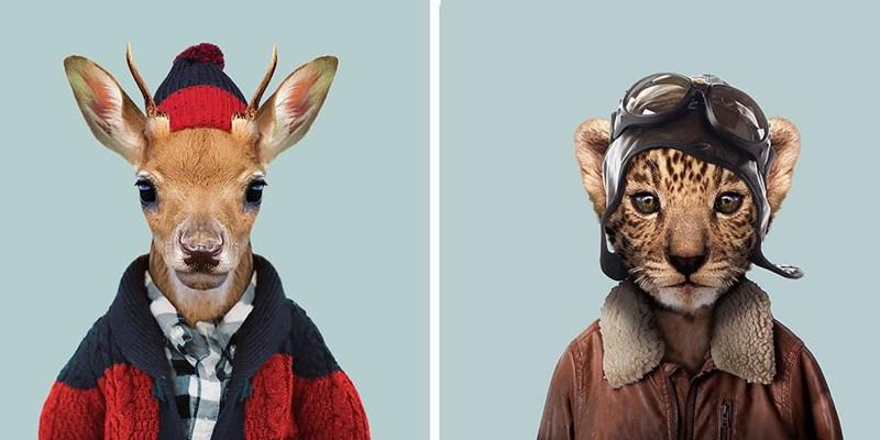 Этот художник одевает животных в человеческую одежду (21фото)