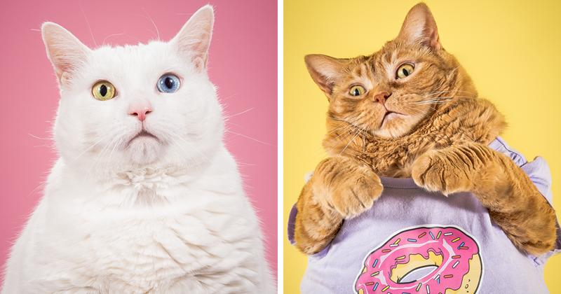 Фотограф делает забавные снимки очень толстых котов (11фото)
