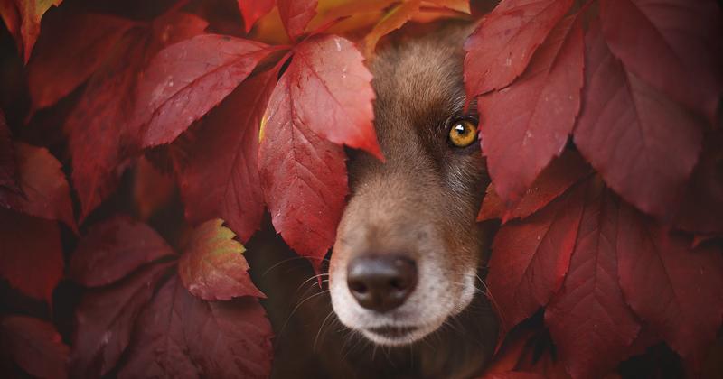 Как собаки наслаждаюся осенью (15фото)