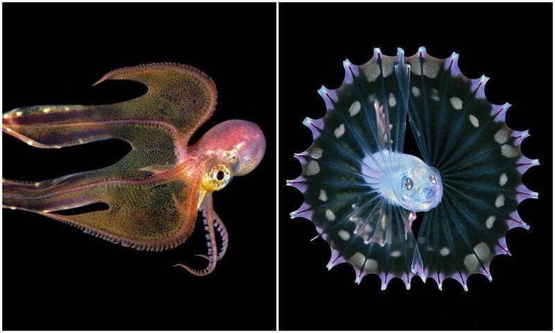 Фотограф-самоучка делает фото личинок морских существ (15фото)