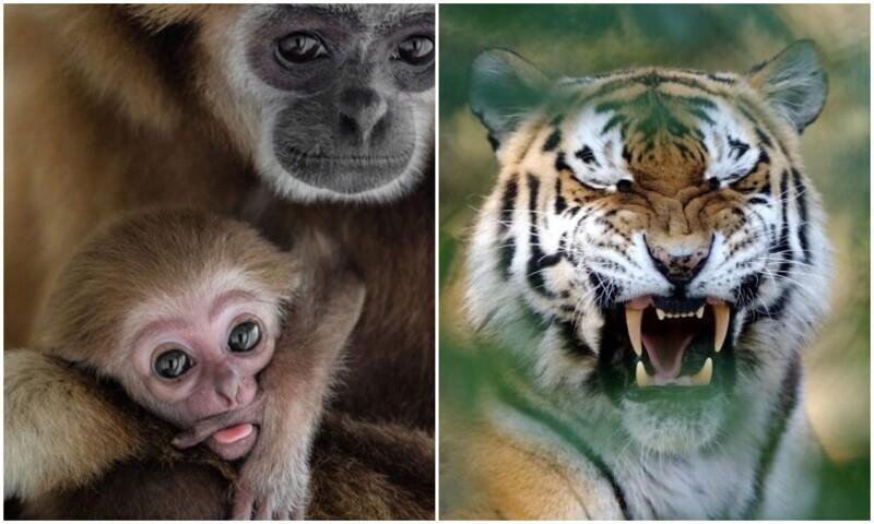 Фотограф показал свои лучшие фото дикой природы за 15 лет работы (31фото)