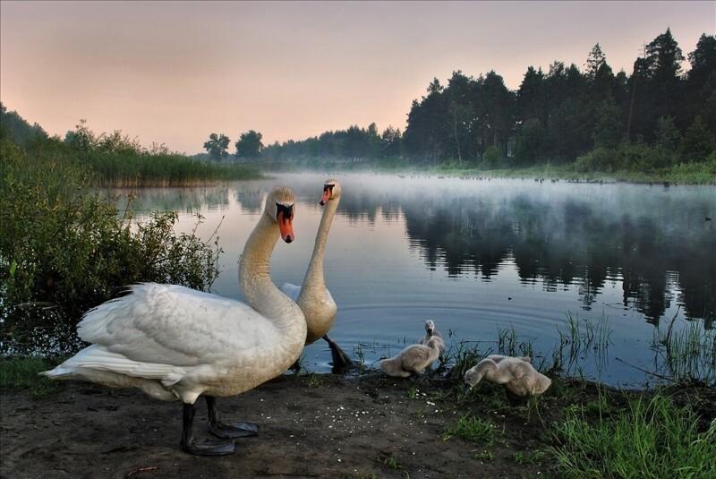 Живописные пейзажи фотографа Игоря Денисова (36фото)