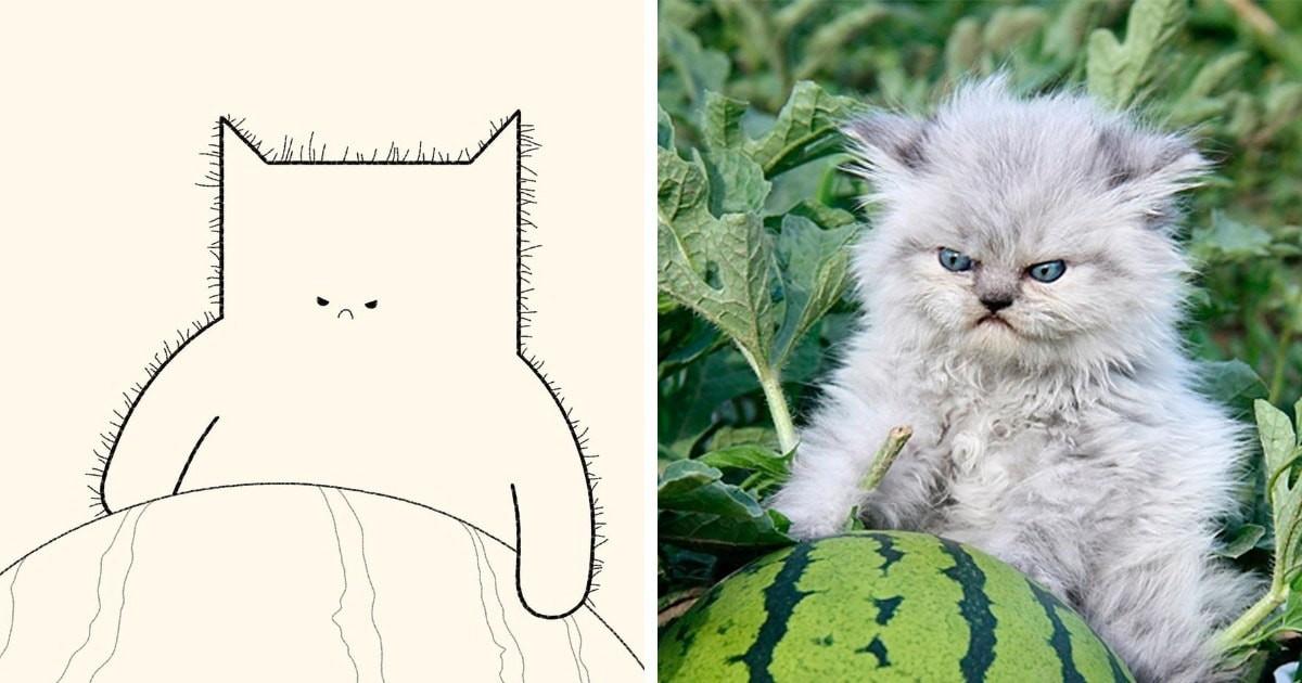 Минималистичные рисунки мемных котов (21фото)