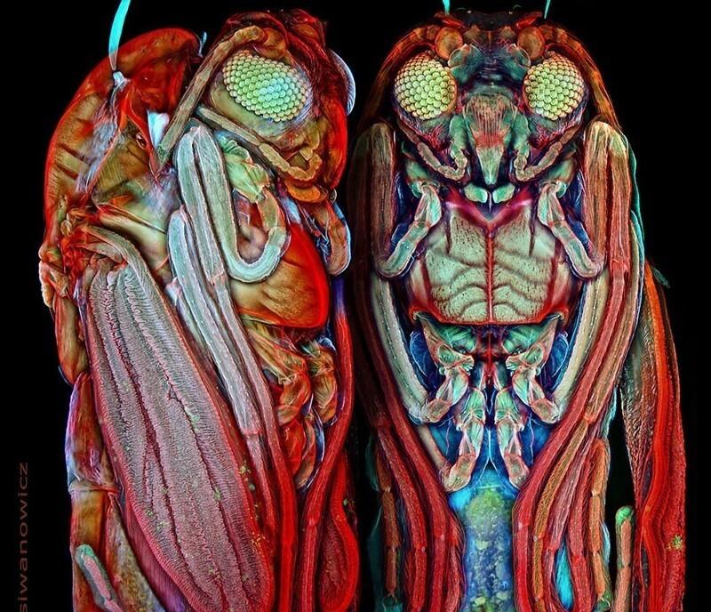Невероятные фотографии крошечных существ под микроскопом (44фото)