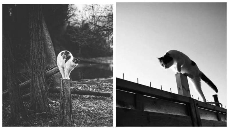 Без кота и жизнь не та: коты-акробаты демонстрируют чудеса баланса (29фото)