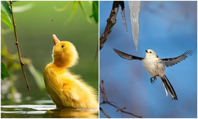 30 фото-финалистов конкурса The Bird Photographer Of The Year (31фото)