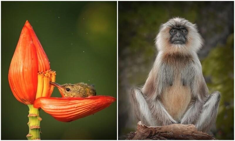 Дикие обитатели индийских лесов в объективе Рахула Сингха (19фото)