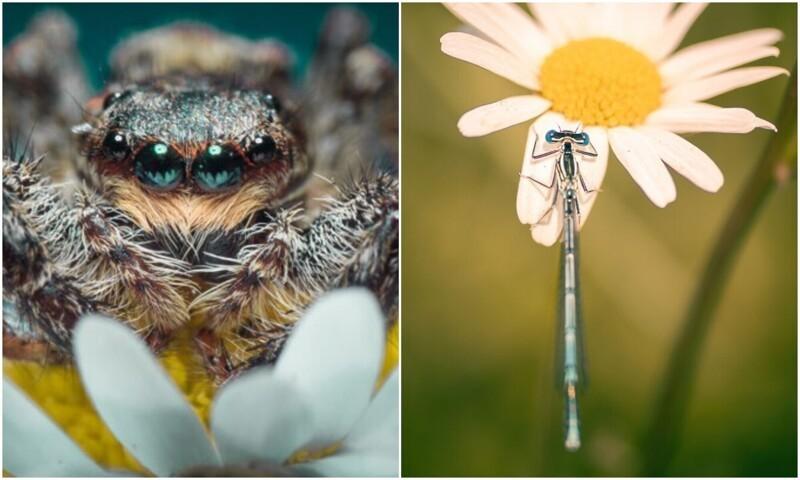 Фотограф показал макро-снимки дикой природы, которые поражают деталями (23фото)