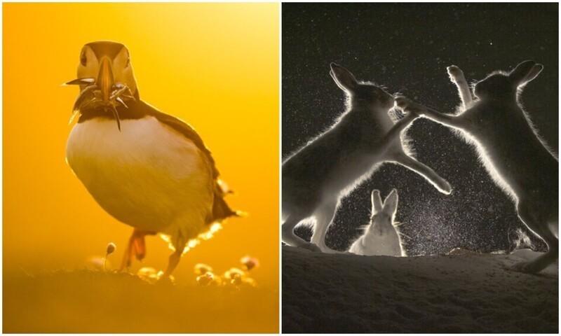 Атмосферные фото ночной дикой природы с конкурса WildArt (28фото)