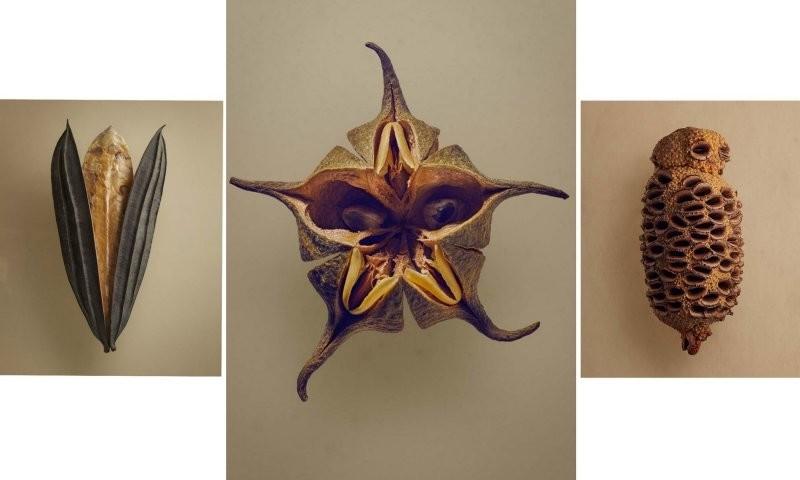 Фотограф показал самые необычные семена и плоды в мире (12фото)