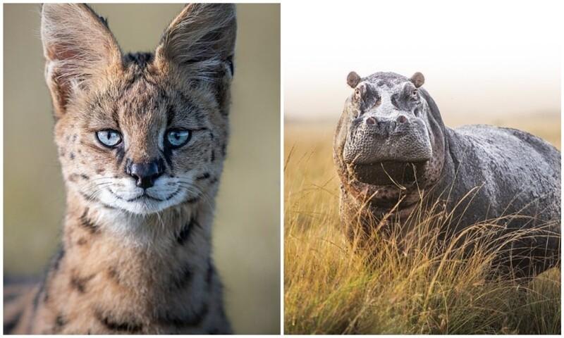 Фотограф застрял в Кении из-за пандемии, и делает удивительные фото животных (30фото)