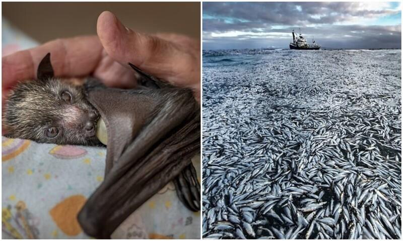 14 лучших фото дикой природы по версии Wildlife Photographer of the Year (15фото)