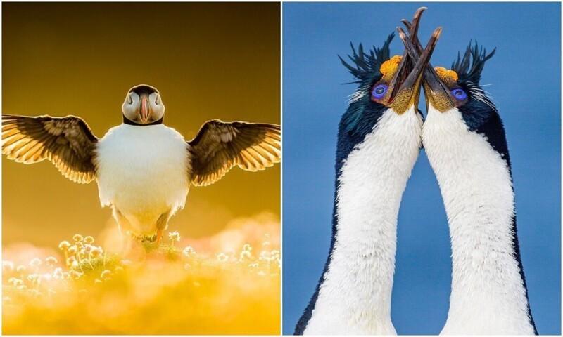 Пернатые красавцы: лучшие фото птиц с конкурса The Bird Photographer (21фото)