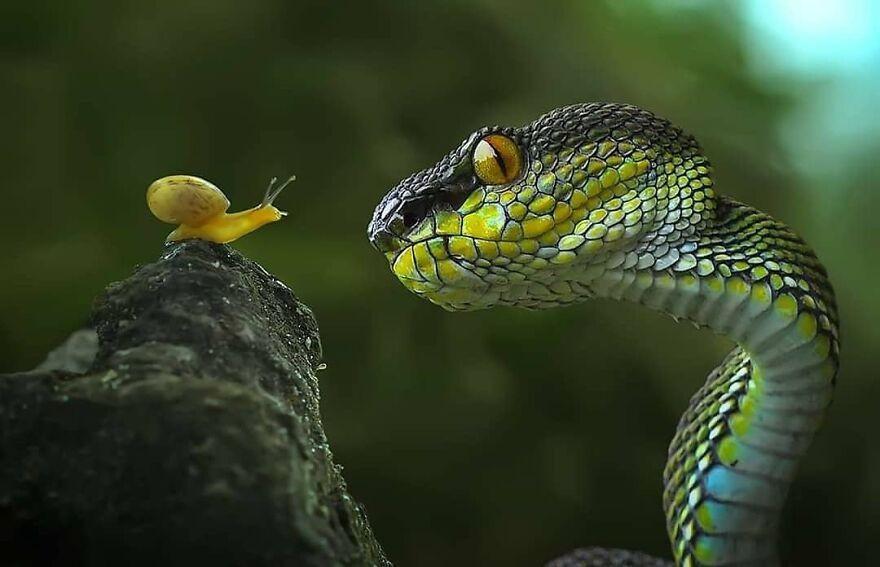 Забавные сцены из жизни рептилий в фотографиях Яна Хидаята (14 фото)