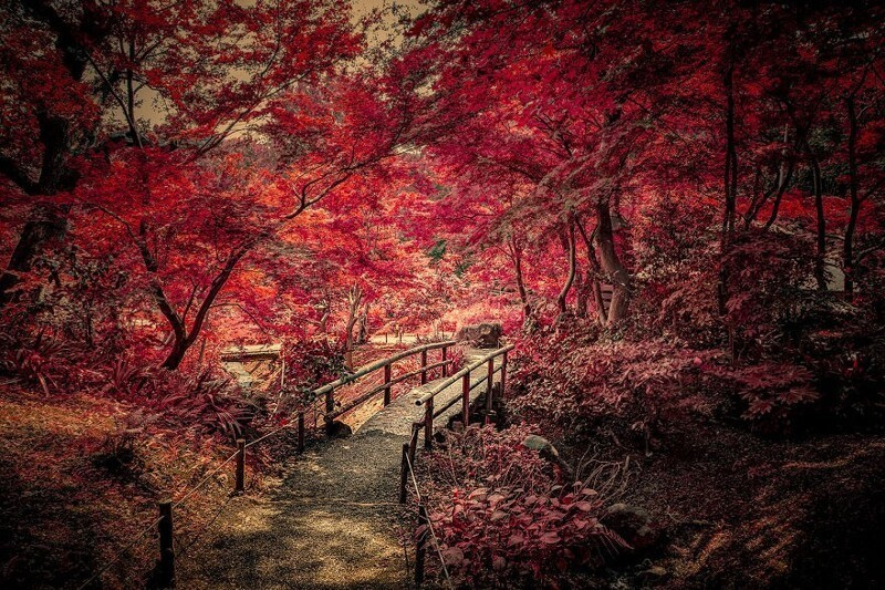 Фотограф осуществил мечту детства, побывав в Японии (27фото)