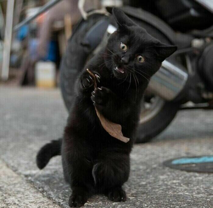 Фото самых милых уличных кошачьих поединков (16фото)
