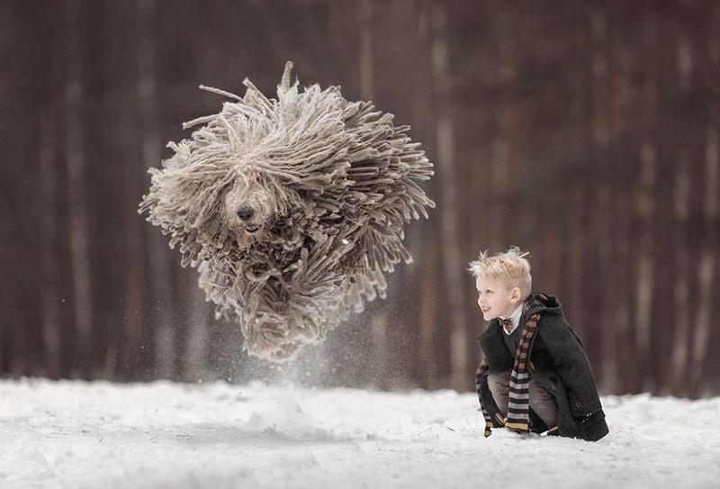 Коммодор - летающая собака (5фото)