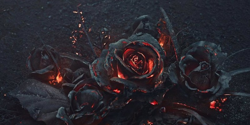 Фотограф сжигает розы ради завораживающих снимков (5фото)