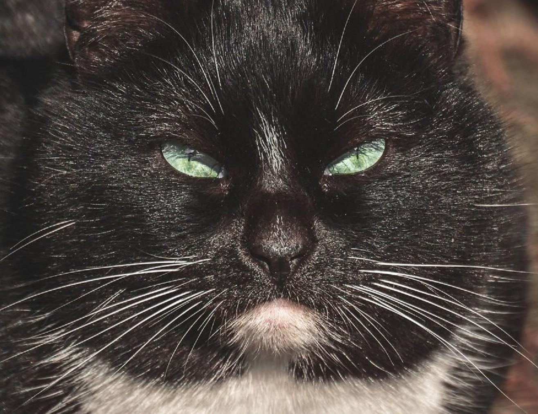 Глубокие портреты бездомных кошек Вильнюса (12фото)