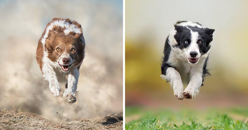 Летящие собаки: так проявляется песья душа! (13фото)