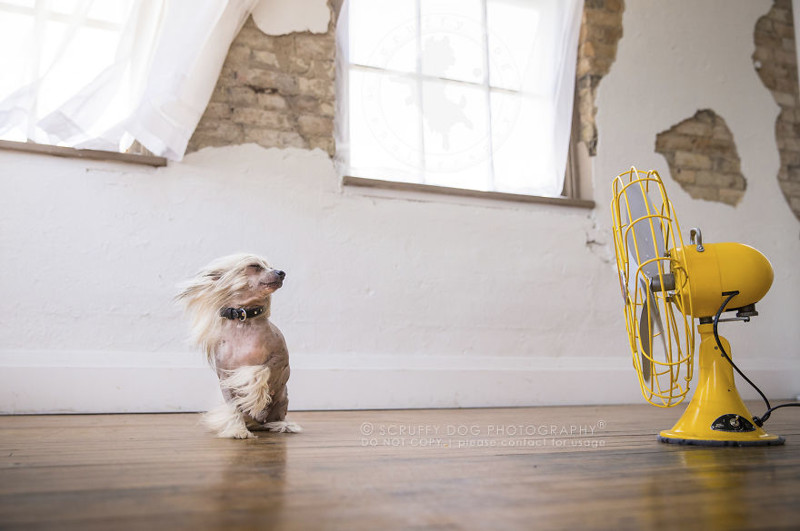 Вентиляторы стали необычным реквизитом для съёмки собак (22фото)