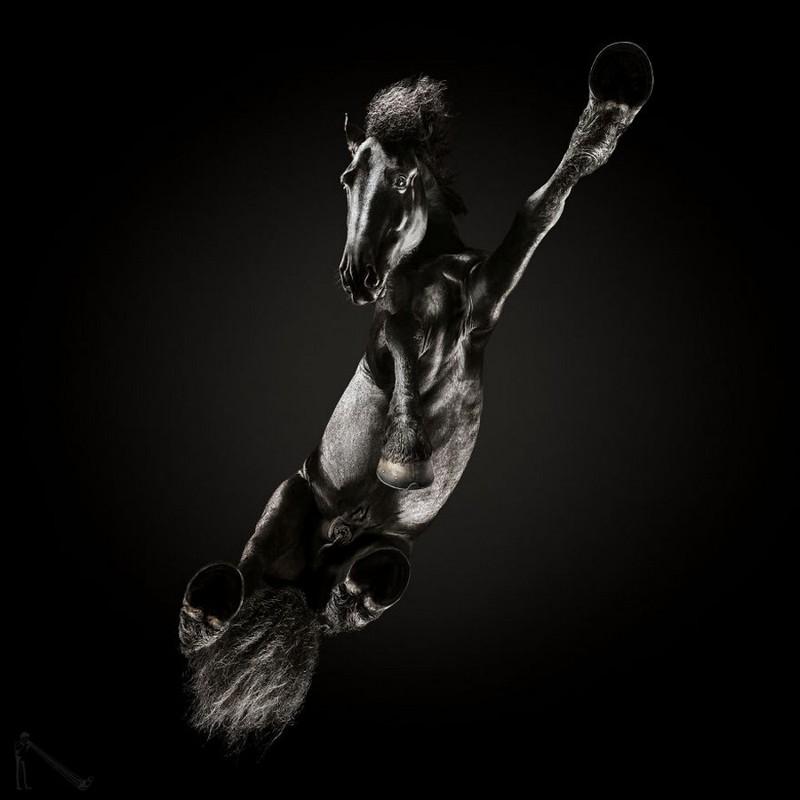 Под конём – самая сложная фотосессия Андриуса Бурбы (14фото)
