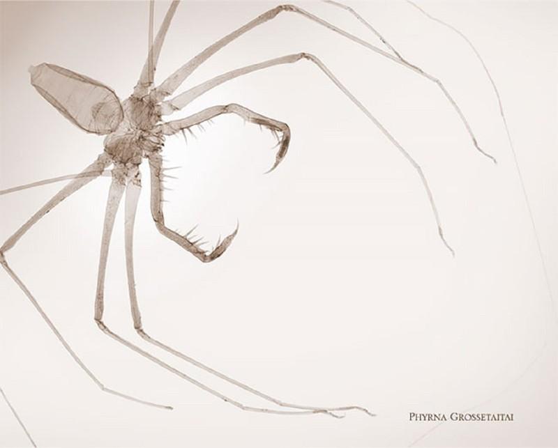 Фотограф-рентгенолог показывает мир насекомых изнутри (12фото)