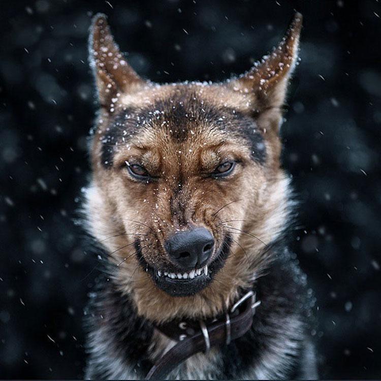 Эмоциональные портреты животных фотографа Сергея Полюшко (14фото)