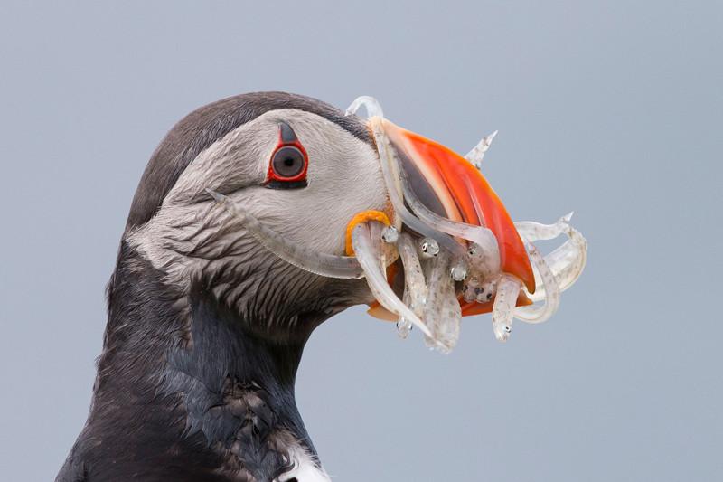 Прекрасные птицы от прекрасных фотографов (21фото)