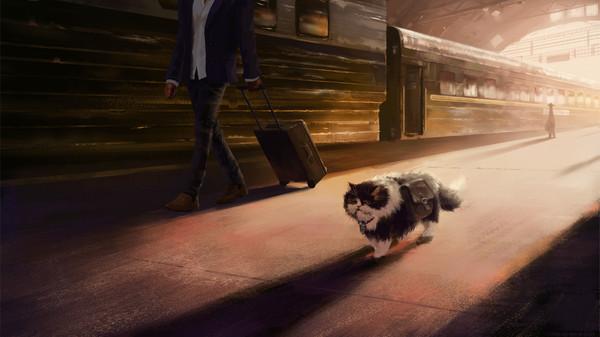 Кот-путешественник, или долгая дорога домой (9фото)
